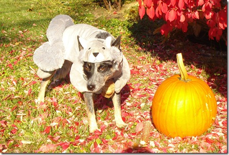 dog costumes 09 010