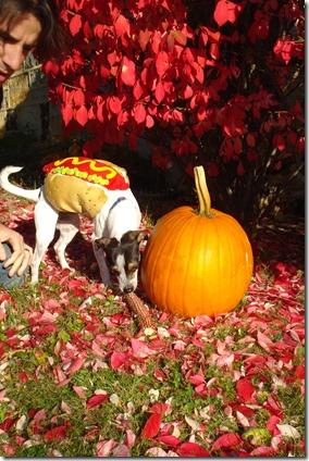 dog costumes 09 006