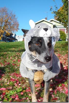 dog costumes 09 014
